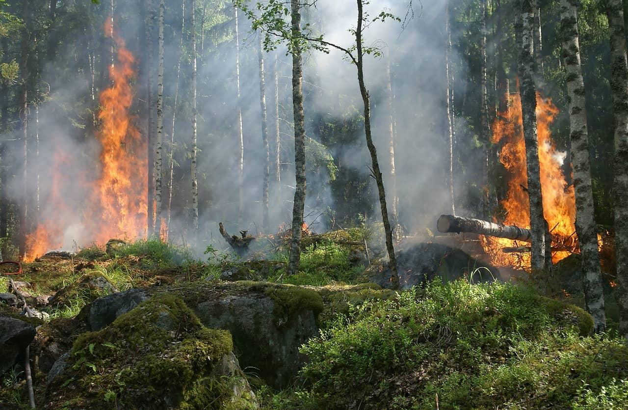 Waldbrandgefahr: Landkreis erlässt Verordnung